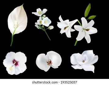 illustration with white flowers collection isolated on black background