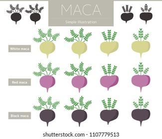 Illustration of white maca, red maca, black maca.