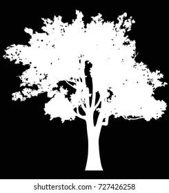 illustration with white oak isolated on black background