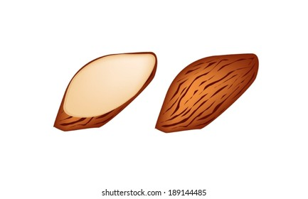 Illustration of Whole Almond and Slice Almond Isolated on White Background, Good Source of Dietary Fiber, Vitamins and Minerals.