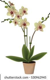 illustration with yellow orchid in pot isolated on white background