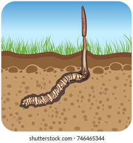 illustration.Painting style. Cordyceps Sinensis In the ground In the square icon.