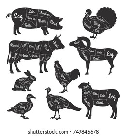 Illustrations for butcher shop. Cutting lines of different parts of domestic animals. Vector butcher animal part, meat diagram scheme rabbit and lamb, cattle and rooster