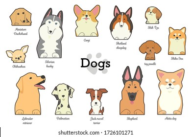 Illustrations of different types of dogs with forepaws and names of dogs