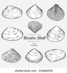 Illustrations of edible bivalves (cockle, clam)