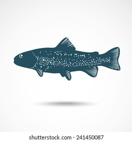 Illustrations of rainbow Trout on the gray. Vector illustration