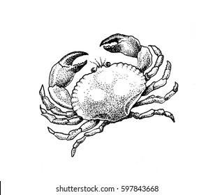 "Illustrations "" Sea depths ""."
