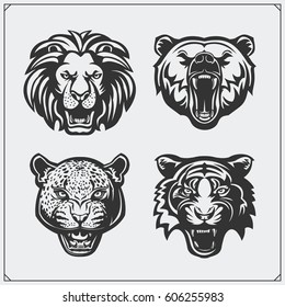 Illustrations of wild animals. Bear, lion, leopard and tiger.