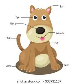 Illustrator of dog body part