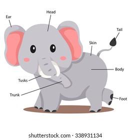 Illustrator of elephant body part