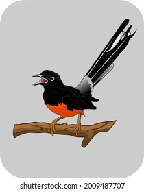 ilustration vektor graphic of murai batu which is a bird with beautiful feathers and also has a melodious voice. this vektor is fit for use design t-shirts,design sticker,etc