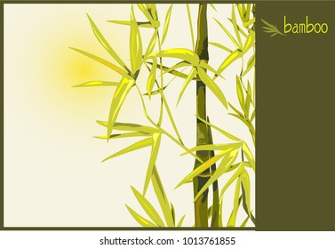 Image of bamboo