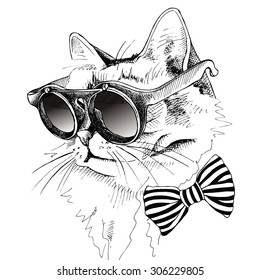 Image cat portrait with sunglasses and tie. Vector illustration.