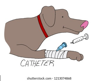 An image of a catheter placed on dogs paw Pet Care.