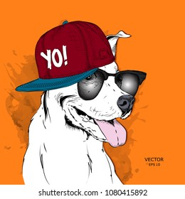 The image of the dog in the glasses and in hip-hop hat. Vector illustration.