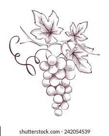 Image of grapes - engraving