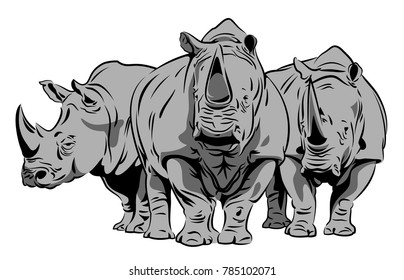 Image of a group of rhinoceroses