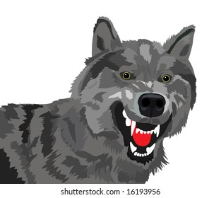 The image of the growling wolf on a white background