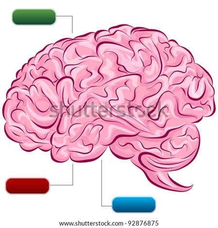 image human brain diagram stock vector (royalty free) 92876875an image of a human brain diagram