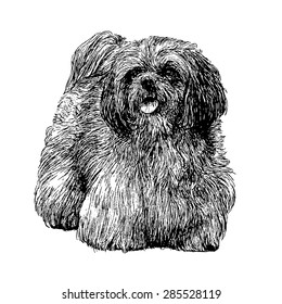 Image of Lhasa Apso hand drawn vector