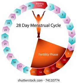 An image of a menstrual cycle chart.