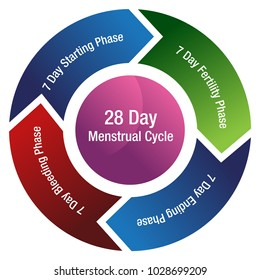 An image of a menstrual cycle chart isolated on white.