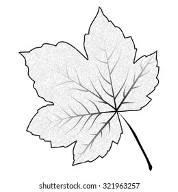 Image of outline maple leaf . Vector illustration isolated on white background.