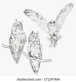 image of an owl in the hunt. vector sketch