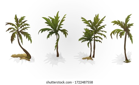 image of palm tree. leaves, trunks and stones. Plants. Theme of the beach and relaxation.