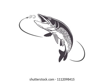 image pike fish