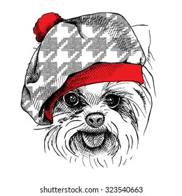Image Portrait of a dog Yorkie in beret hat. Vector illustration.