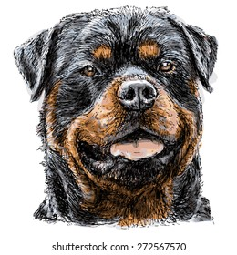 Image of Rottweiler hand drawn vector