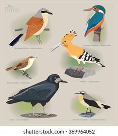 Image set of birds: red-backed shrike, common kingfisher, garden warbler, hoopoe, rook, northern wheatear. Vector illustration