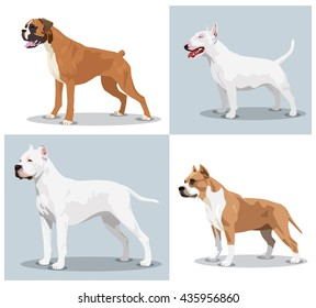 Image set of dogs: Boxer, Bull Terrier, Dogo Argentino, American Pit Bull Terrier. Vector illustration