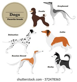 Image set of dogs: Greyhound, Russian hound, Husky, Poodle, Dalmatian, Collie. Vector illustration.
