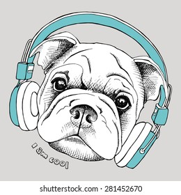 Image Shar Pei portrait with blue headphone on a gray background. Vector illustration.