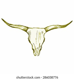 Image of the skull of a bull.