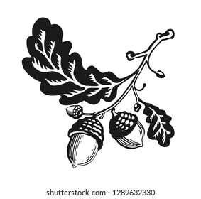 Image of a stylized oak tree branch with acorns on it. Decorative graphic vector illustration.