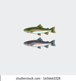 Image trout. Marieties of salmon