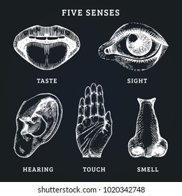 Images set of five human senses in engraved style. Vector illustration of sensory organs.
