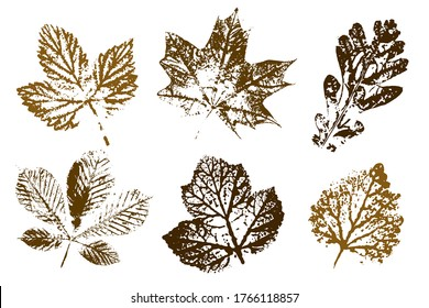 The imprint of the leaves.  Objects isolated on white. Isolated objects on white background. Vector illustration.