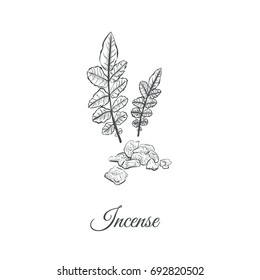 Incense Sketch hand drawing. Vector illustration of frankincense. Plant and stone incense