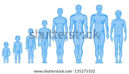 feabb2ce6 Increasing Male Body Shapes Proportions Man Stock Vector (Royalty ...