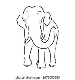 indian asian elephant, vector sketch illustration