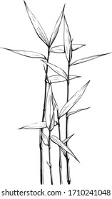 Indian cane vector drawing, bamboo sticks, coloring book, tattoo idea