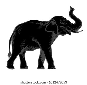 Indian elephant, silhouette, dark, sketch style, isolated