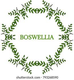 Indian Frankincense Salai or Boswellia serrata vintage illustration. Round frame, decorative border.Olibanum-tree (Boswellia sacra), aromatic tree. Ink hand drawn herbal illustration in sketch style