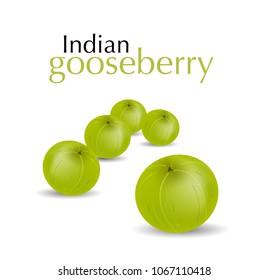 Indian gooseberry vector