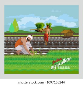 Indian paddy Agriculture