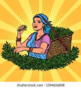 Indian or Sri Lanka tea picker. Traditional harvest. woman in national dress. Pop art retro vector illustration kitsch vintage